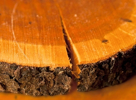 odkup-secnja-lesa